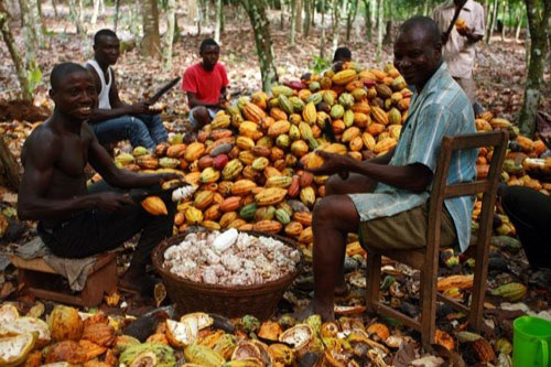 The Royal Cocoa Farm Project of the Royal House of Sefwi Obeng-Mim
